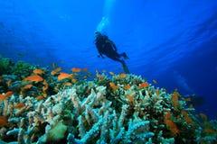 koralowi nurkowie badają rafowego akwalung Zdjęcia Stock