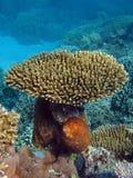 koralowi ogródy Zdjęcia Stock