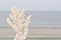 koralowy biel Zdjęcie Stock