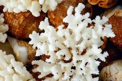 koralowy biel Obrazy Royalty Free