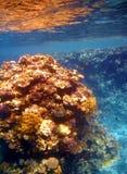 koralowy czerwieni rafy morze Zdjęcia Stock