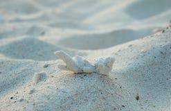 Koralowy gruz który myje up na plaży tworzył od starych nieżywych korali Obrazy Royalty Free