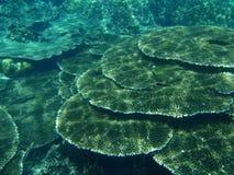 koralowy mieszkanie Zdjęcie Stock
