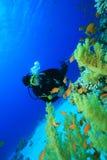 koralowy nurek bada rafowego akwalung Obrazy Stock