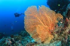 koralowy nurek bada rafowego akwalung Zdjęcie Royalty Free