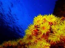 koralowy słońce fotografia royalty free