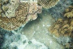 Koralowy życie w Wielkiej astrolabium rafie Zdjęcia Royalty Free