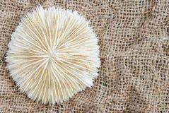 Koralowy zakończenie na lnie i przestrzeń dla teksta Zdjęcie Stock