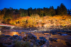 Korankei in autumn with lighting show in aichi,japan Royalty Free Stock Image