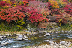 Korankei - folkmassan av turisten tycker om den härliga hösten arkivfoton
