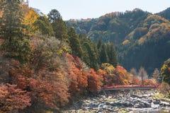 Korankei Forest autumn park Nagoya royalty free stock photography
