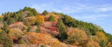 Korankei Forest autumn park Nagoya Stock Images