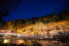 Korankei i höst med belysningshow i aichi, Japan Royaltyfria Foton