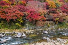 Korankei - tłum turysta cieszy się piękną jesień Zdjęcia Stock