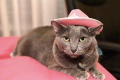 Korat Cat With Pink Hat Stock Images