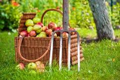 Korb der Äpfel Stockfoto