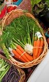 Korb der Karotten und des Fenchels Lizenzfreies Stockfoto