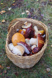 Korb der Pilze Lizenzfreies Stockfoto