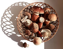 Korb der Pilze Kopierte Schatten auf dem weißen Hintergrund Stockfotografie