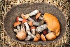 Korb der Pilze Orange-Schutzkappe Boletus lizenzfreie stockfotografie