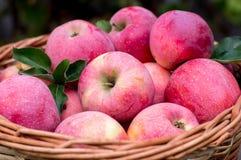 Korb der reifen Äpfel Stockfotos