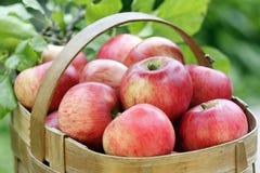 Korb der roten Äpfel Stockfotos