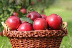 Korb der roten Äpfel Lizenzfreie Stockbilder