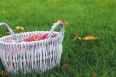 Korb der roten Äpfel Stockfotografie