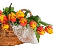 Korb der roten und gelben Tulpen mit Spitze Lizenzfreies Stockfoto