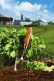 Korb des Kopfsalates im Garten lizenzfreie stockfotografie