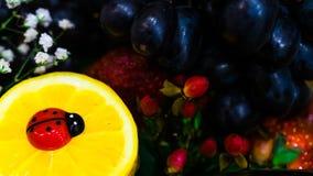 Korb-eingeschenk mit einer Vielzahl von Früchten und von Wein stockfotografie