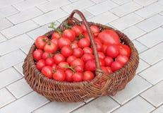 Korb gefüllt mit Tomaten Lizenzfreies Stockfoto