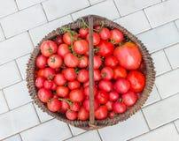 Korb gefüllt mit Tomaten Lizenzfreie Stockfotografie