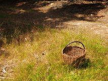 Korb im Wald Stockfoto