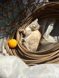 Korb-Katze stockbild