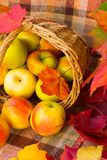 Korb mit Äpfeln Lizenzfreie Stockfotografie