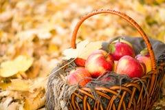 Korb mit Äpfeln auf Herbstlaub im Wald Lizenzfreies Stockfoto