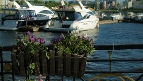 Korb mit Blumen auf dem Zaun stock footage
