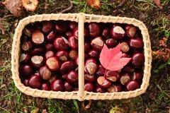 Korb mit chesnuts und einem roten Ahornblatt Stockbilder