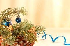Korb mit einem Zweig einer blauen Fichte Lizenzfreie Stockbilder