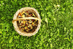 Korb mit essbaren Pilzen Lizenzfreies Stockbild