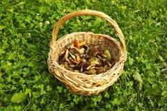 Korb mit essbaren Pilzen Lizenzfreies Stockfoto