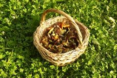 Korb mit essbaren Pilzen Stockfotografie