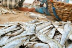 Korb mit Fischen auf dem Sand stockfoto