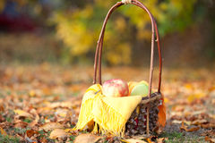 Korb mit Früchten auf einer Wiese Stockfotos