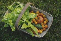 Korb mit Gemüse Stockfotografie