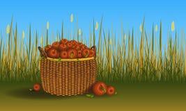 Korb mit Haufen von Äpfeln aus den Grund Feld des Getreides und des Grases auf Hintergrund Auch im corel abgehobenen Betrag stock abbildung