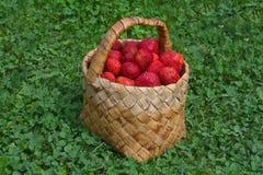 Korb mit neuen stawberries Lizenzfreie Stockbilder