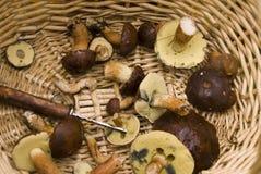 Korb mit Pilzen Stockbilder