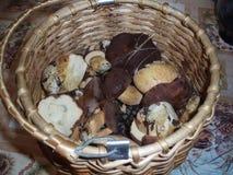 Korb mit Pilzen Stockfoto